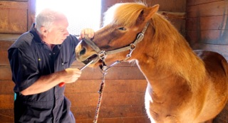 Ken Pankow conducts an equine dental exam